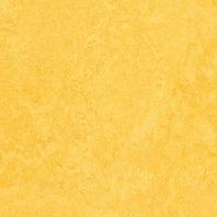 Marmoleum Click Lemon zest